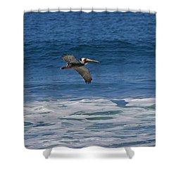 Pelican Trio Shower Curtain