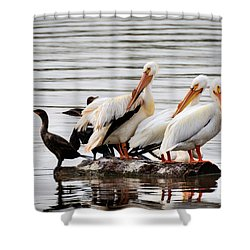 Pelicans And Cormorants Shower Curtain