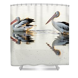 Pelicans At Dusk Shower Curtain by Werner Padarin