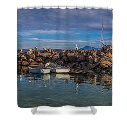 Pelicans At Eden Wharf Shower Curtain by Racheal  Christian
