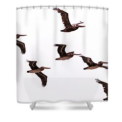 Pelicans At Half Moon Bay Shower Curtain