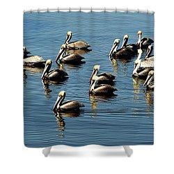 Pelicans Blue Shower Curtain