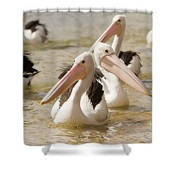 Pelicans Shower Curtain by Craig Dingle