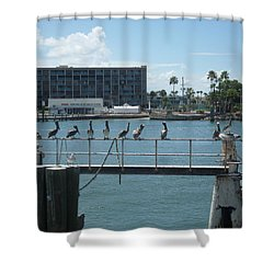 Pelicans In A Row Shower Curtain by Val Oconnor