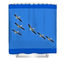 Pelicans In Blue Shower Curtain