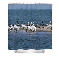 Pelicans Island Shower Curtain by Cindy Croal