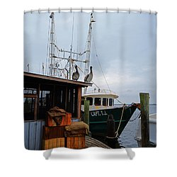 Pelicans Looking For Lunch Shower Curtain