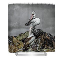 Pelicans On Rocks Shower Curtain by Racheal Christian