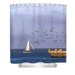 Shower Curtain featuring the photograph Pelicans Pelicans by Kate Brown