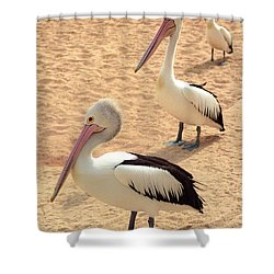 Shower Curtain featuring the photograph Pelicans Seriously Chillin' by T Brian Jones