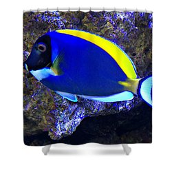 Blue Tang Fish  Shower Curtain by Kathy M Krause