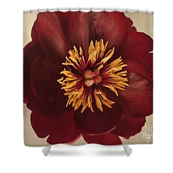 Penny Peony Shower Curtain