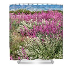 Penstemon At Black Hills Shower Curtain by Karen Stephenson