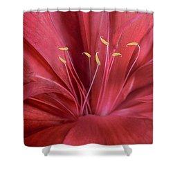 Peonia Insight Shower Curtain