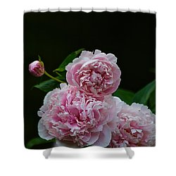 Peonies  Shower Curtain by Gillis Cone