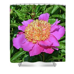 Peony 10 Shower Curtain by Eva Kaufman