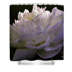Peony At Eventide Shower Curtain