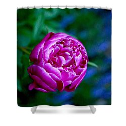 Peony Bloom Shower Curtain by Gillis Cone