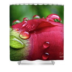Peony Drops 2 Shower Curtain