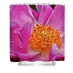 Pink Flower Peony Garden Wall Art Shower Curtain