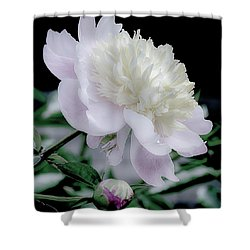 Peony In Bloom Shower Curtain by Julie Palencia