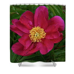 Shower Curtain featuring the photograph Peony In Rain by Sandy Keeton