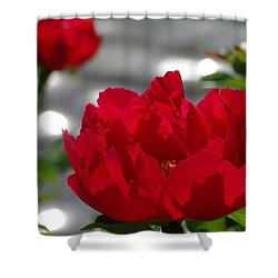 Shower Curtain featuring the photograph Peony In Red by Rebecca Overton
