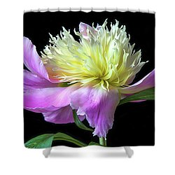 Peony On Black Shower Curtain