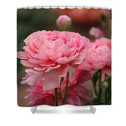 Peony Pink Ranunculus Closeup Shower Curtain