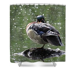 Perchance To Dream Of Fair Wood Duck Maidens Shower Curtain by I'ina Van Lawick