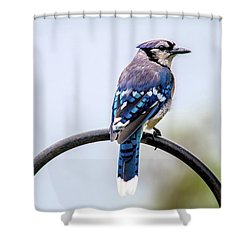 Shower Curtain featuring the photograph Perched Blue Jay by Onyonet  Photo Studios