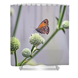 Perched Butterfly No. 255-1 Shower Curtain by Sandy Taylor