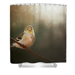 Shower Curtain featuring the photograph Perched Goldfinch by Darren Fisher