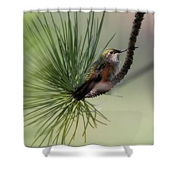 Perched In A Pine Shower Curtain