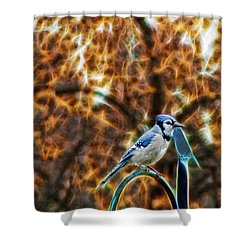 Shower Curtain featuring the photograph Perched Jay by Cameron Wood