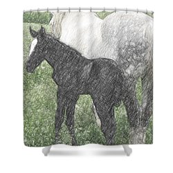 Percheron Colt And Mare In Pasture Digital Art Shower Curtain