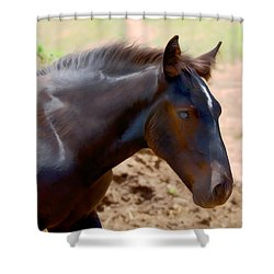 Percheron Colt - Digitalart Shower Curtain