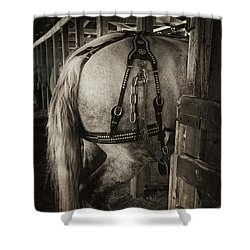 Percheron Draft Horse Shower Curtain by Theresa Tahara