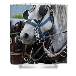 Percheron Horses Shower Curtain by Theresa Tahara