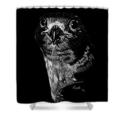 Peregrin Falcon Shower Curtain