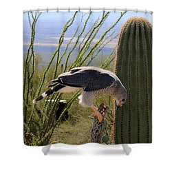 Shower Curtain featuring the photograph Peregrine Falcon - 2 by Christy Pooschke