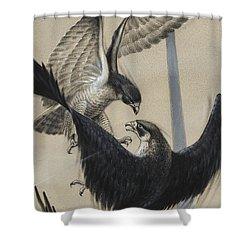Peregrine Falcon And Kestrel Shower Curtain