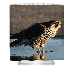 Peregrine Falcon Shirley New York Shower Curtain by Bob Savage