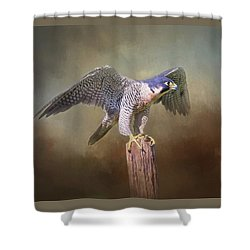 Peregrine Falcon Taking Flight Shower Curtain