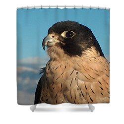Peregrine Falcon Shower Curtain by Tim McCarthy