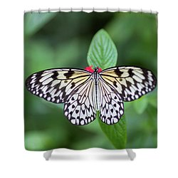 Shower Curtain featuring the photograph Perfect Butterfly Pose by Raphael Lopez