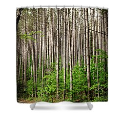 Perfect Path Shower Curtain