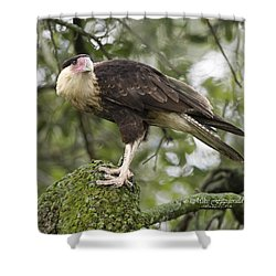 Perfect Perch Shower Curtain