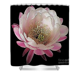 Perfect Pink And White Cactus Flower Shower Curtain by Merton Allen