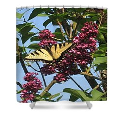 Yellow Swallowtail And Lilac Shower Curtain